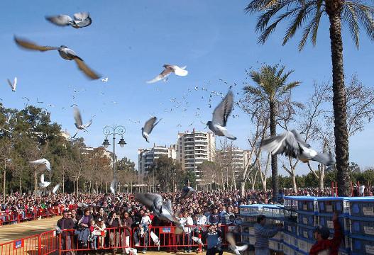 Jerez bendice todos los años a sus animales durante la Fiesta de San Antón