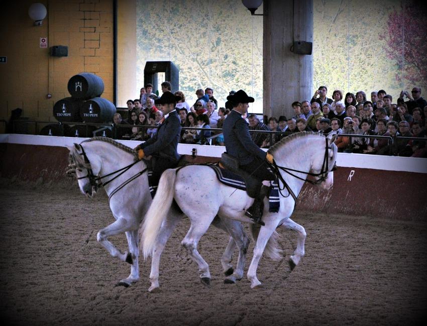 La Yeguada Cartuja ofrece visitas y espectáculos ecuestres todos los sábados